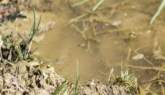 Disposición de lecho nitrificante o terreno de infiltración